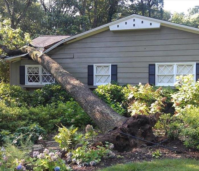 Storm Damage Tri-Valley suffers trees falling on homes.