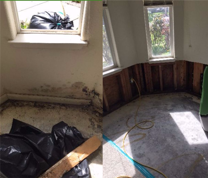 Mold Remediation Mold takes over Hayward home office